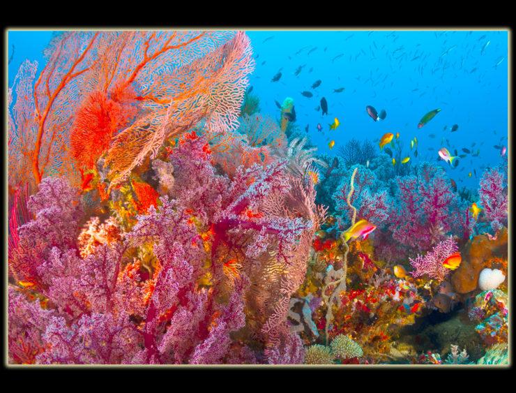 CHRIS GUG Photo color image 1